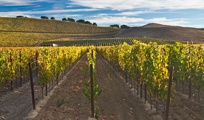 Santa Rita Hills, Pinot Noir, Drum Canyon Vineyard